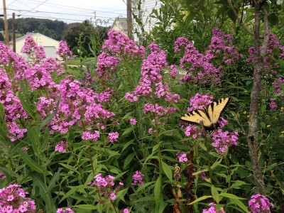 Gardening for Pollinators: Seminar & Tour