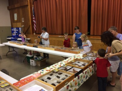 York County Insect Fair