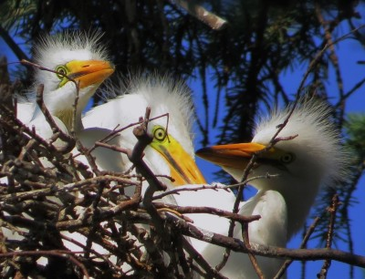 York Audubon Society