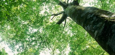 A Celebration of Trees -- Rescheduled to May 13