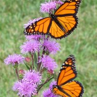 22nd Annual Penn State Extension Master Gardeners Native Plant Sale
