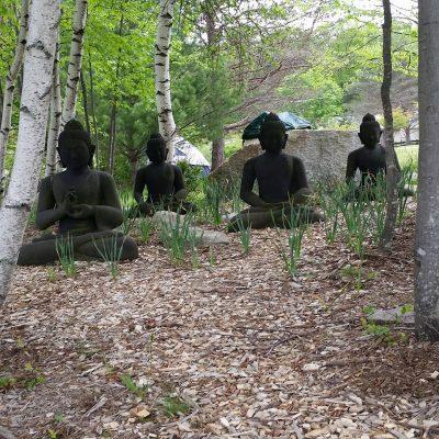Weekly mindfulness & meditation practice