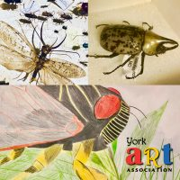 Art & Bugs! Illustrative & Abstract Inspirations (all levels)