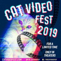 SMALL STAR film: 2019 CatVideo Festival