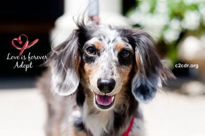 Yappy Hour at Moon Dancer Winery