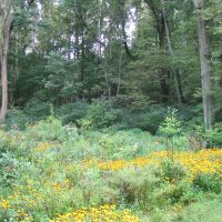 The 14th Annual Gardening with Natives Seminars and Field Trip