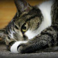 Alba Rosa Cat Parlour